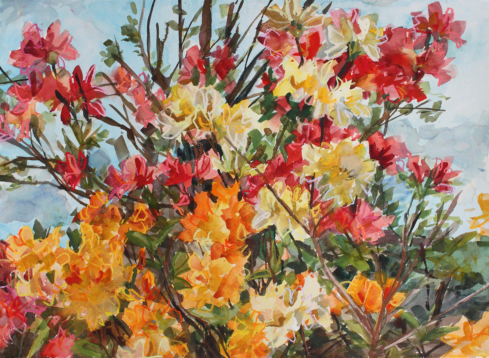 Watercolour painting of azaleas by Shona Barr
