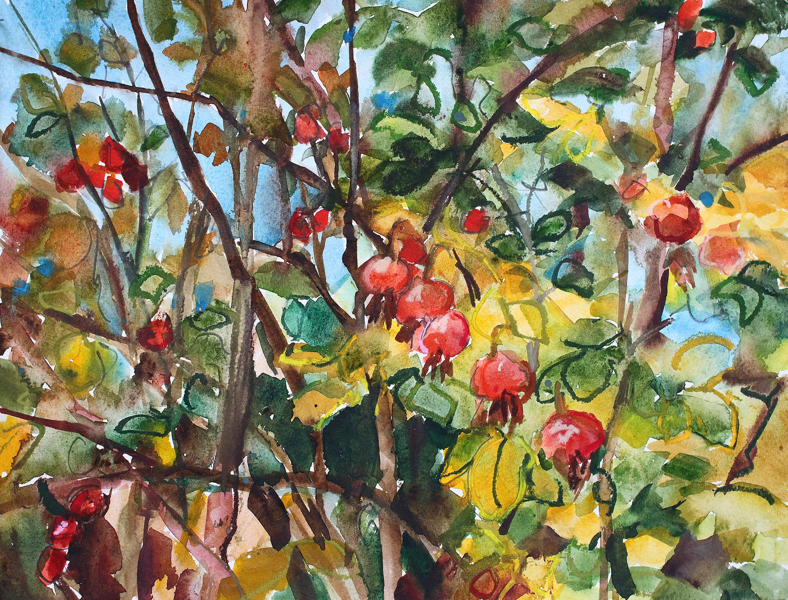 Painting of Rose Hips by Shona Barr